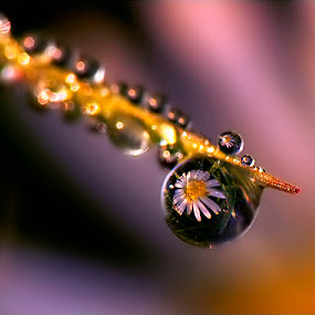 by Pete Jones - Nature Up Close Water
