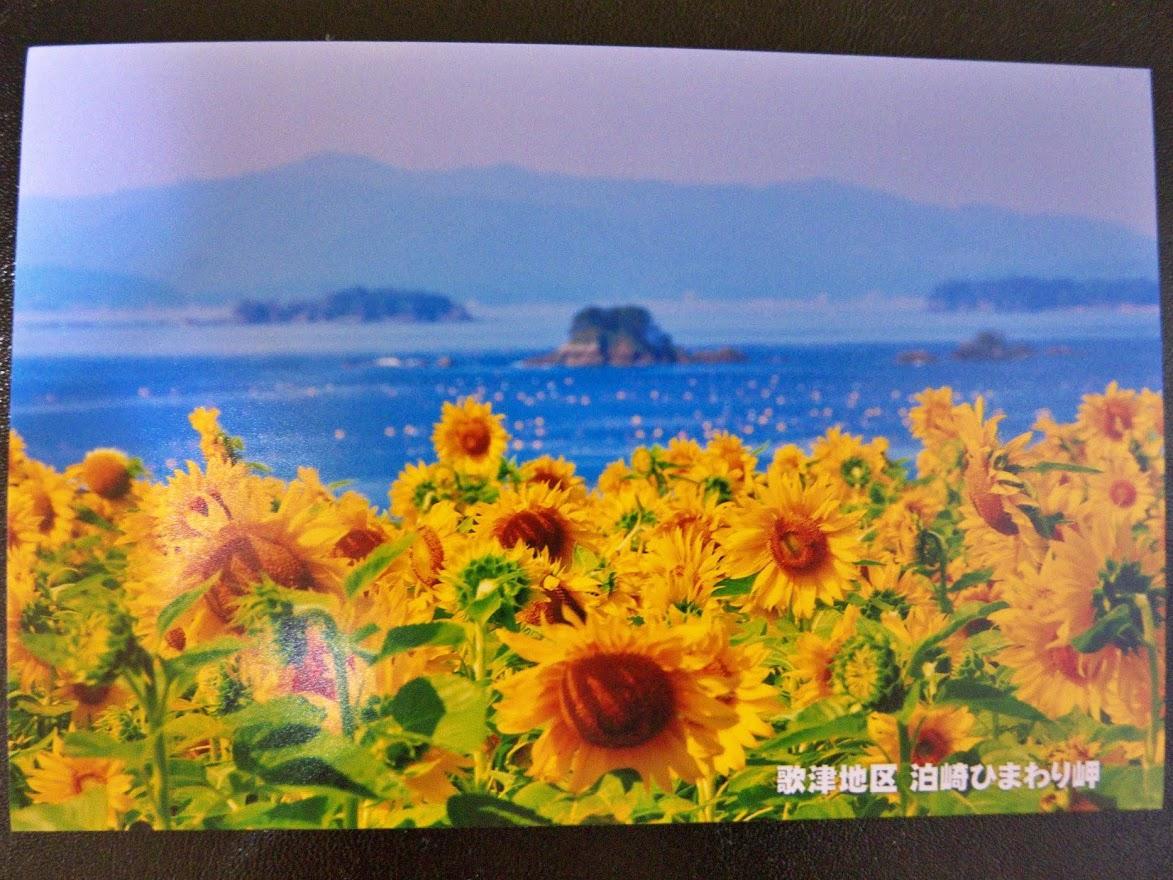 佐良スタジオさんのポストカードコレクション 32.歌津地区 泊崎ひまわり岬