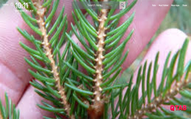 Spruce Twig Wallpapers HD Theme