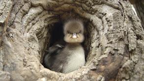 Animal Homes: The Nest thumbnail