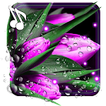 Tulips Dew Drops LWP Icon