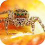 Spider. Top Rated Wallpapers APK icon