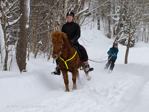 Photo: Horse-skiing - The icelandic horse Vakur can be used for many purposes!