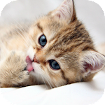 CAT Wallpapers v3 Icon