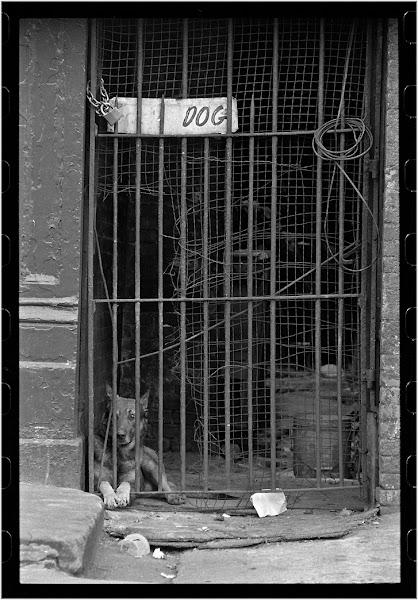 Photo: DOG