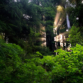 Sunbeam by Dan Warkentin - Landscapes Forests ( ray, tree, foliage, green, forest, sunrise )
