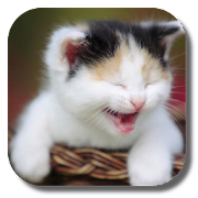 Funny Cat Live Wallpaper‏