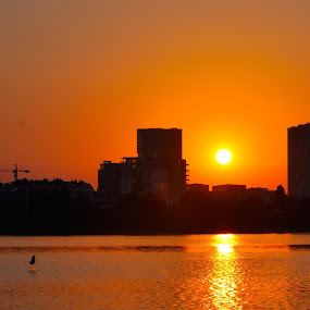 sunrise by Mihai Nita - City,  Street & Park  Skylines ( bird, fishing bird, skyline, sunrise, water mirror, orange light,  )