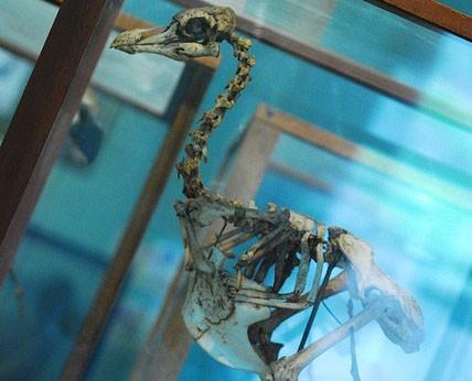 Photo Le Museum d'histoire naturelle