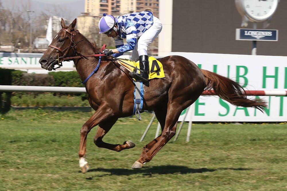 Liberatore (No Nay Never) gana Handicap (1300m-Pasto-CHS).