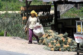 Photo: Ananasų moteris - ką tik iš dirbamo lauko.  The pineapple lady - just from the work field.