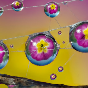 Very big drops of dew by Alberto Ghizzi Panizza - Abstract Water Drops & Splashes ( shpere, wire, spiderweb, dew, drops, web, primerose,  )