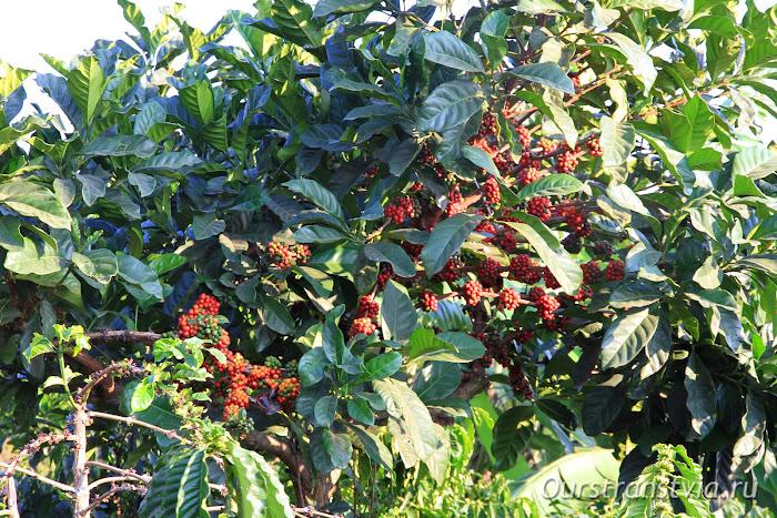 Вьетнамский кофе в Далате