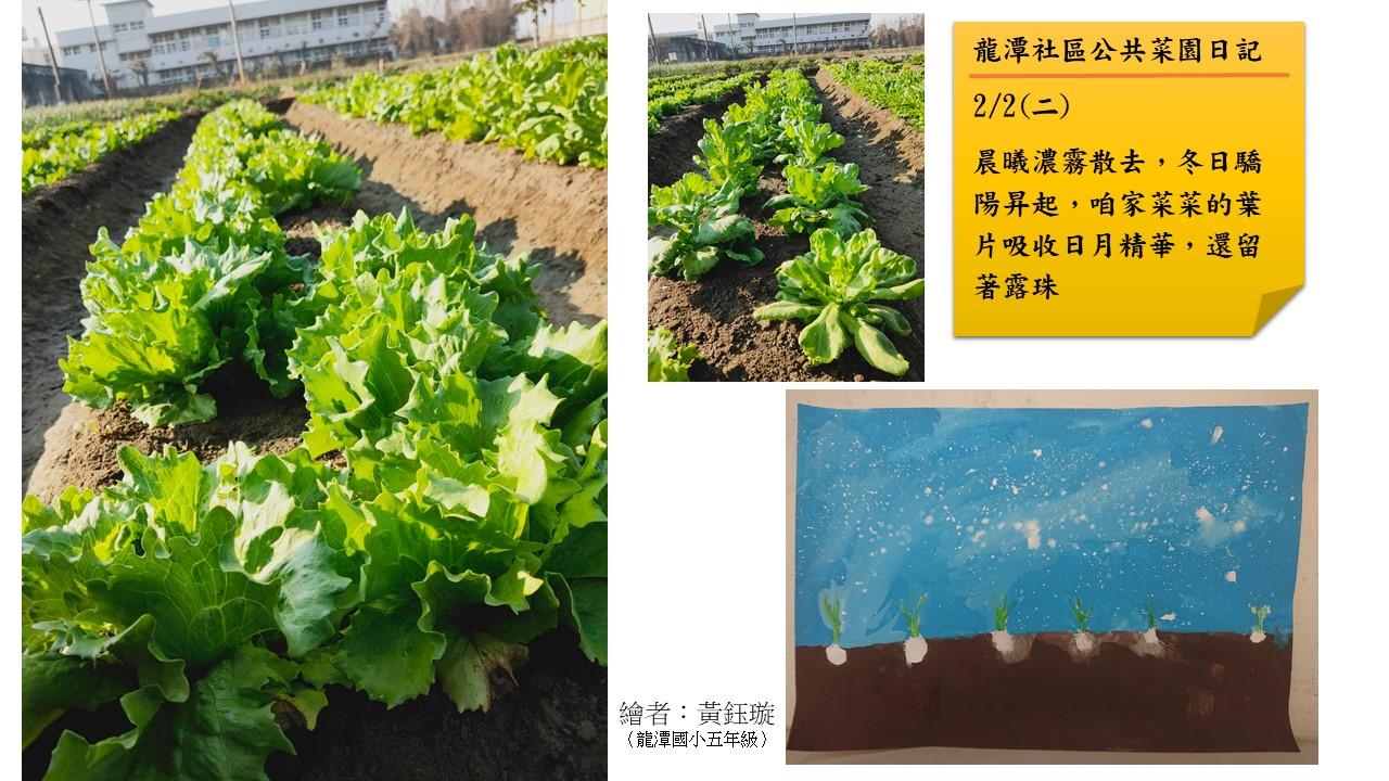 一個退休上班族投入烏殼綠竹筍之友善農法的心路歷程分享