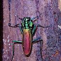 Irisdescent Bark Mantis