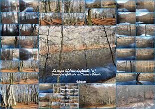 Photo: La magia del bosco... Laghicello comune di San Benedetto Ullano(cs) Immagine scattate da cistaro Antonio