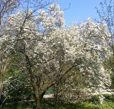 Photo: F4230546 w Ogrodzie Botanicznym