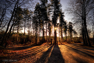Photo: In The Land Of The Giants  Good morning Googler's, did I miss anything? I have been offline (apart from checking messages etc) since Friday, sometimes its good to simply unplug from the web now and then.  This is a early shot taken in one of my favourite stomping grounds in Delemere Forest in Cheshire UK, I fell lucky with the winter sun casting glorious shadows through the tree's one autumn, I need to get back to get some sunrises here, its a beautiful place.
