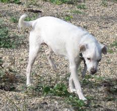 Photo: Lilla Vildhunden 19 dec