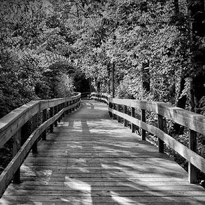 walkway bw.jpg