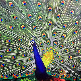 peacock by Anshul Sukhwal - Artistic Objects Other Objects