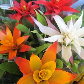 Colorful Flowers by Viive Selg - Flowers Flower Gardens (  )
