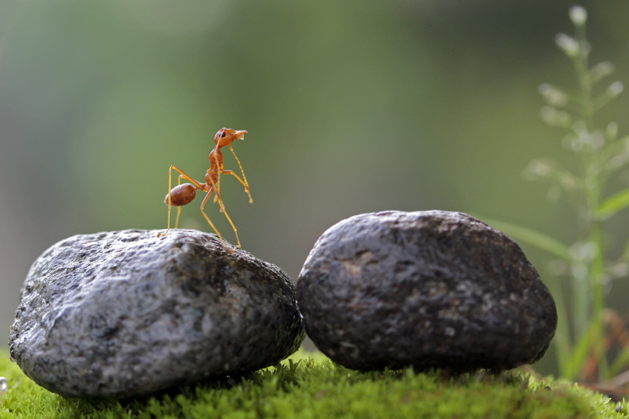 where's my friends by Teguh Santosa - Animals Insects & Spiders
