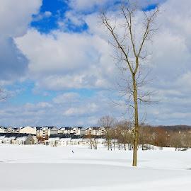 The snow covered village. by Peter DiMarco - City,  Street & Park  Vistas ( village, snow scene, snowy, cityscape, city )