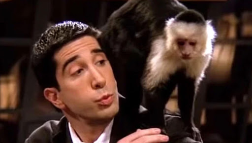 'Friends' animal trainer reckons David Schwimmer was jealous of Marcel getting more laughs than him
