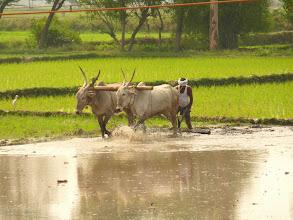 Photo: #220-Le Karnataka