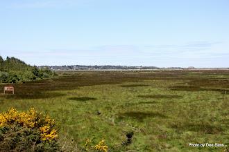Photo: (Year 2) Day 354 - Bandon Marshes