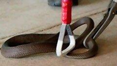 Snake Wrangler thumbnail
