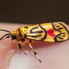 Love Letter Moth