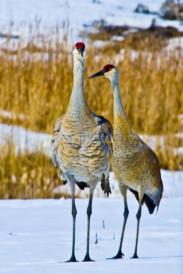 by Brent Flamm - Animals Birds