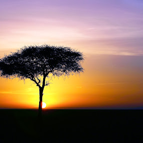 Acacia dawn by Sue Green - Landscapes Sunsets & Sunrises ( east africa,  )