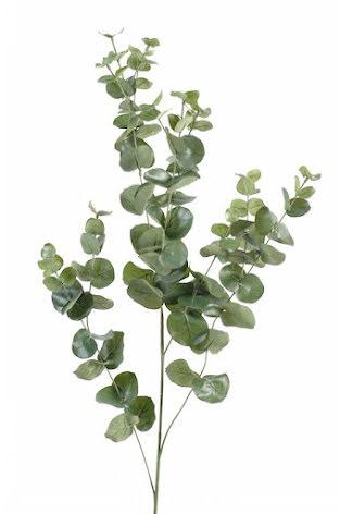 Eukalyptus - ekologisk eterisk olja