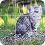 Picture Puzzle: Exotic Cats