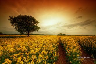 Photo: Yellow Storm
