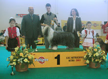 Photo: NAT Show Nitra, SK 1st place with ICh. Dea-Dro Kasiterit Mona,  judge: Mrs. V. Staviarska/SK Saturday, March 29, 2003