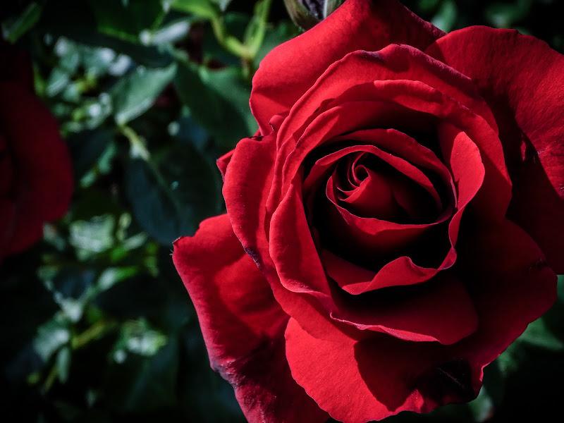Flower Power di adele_pezzana