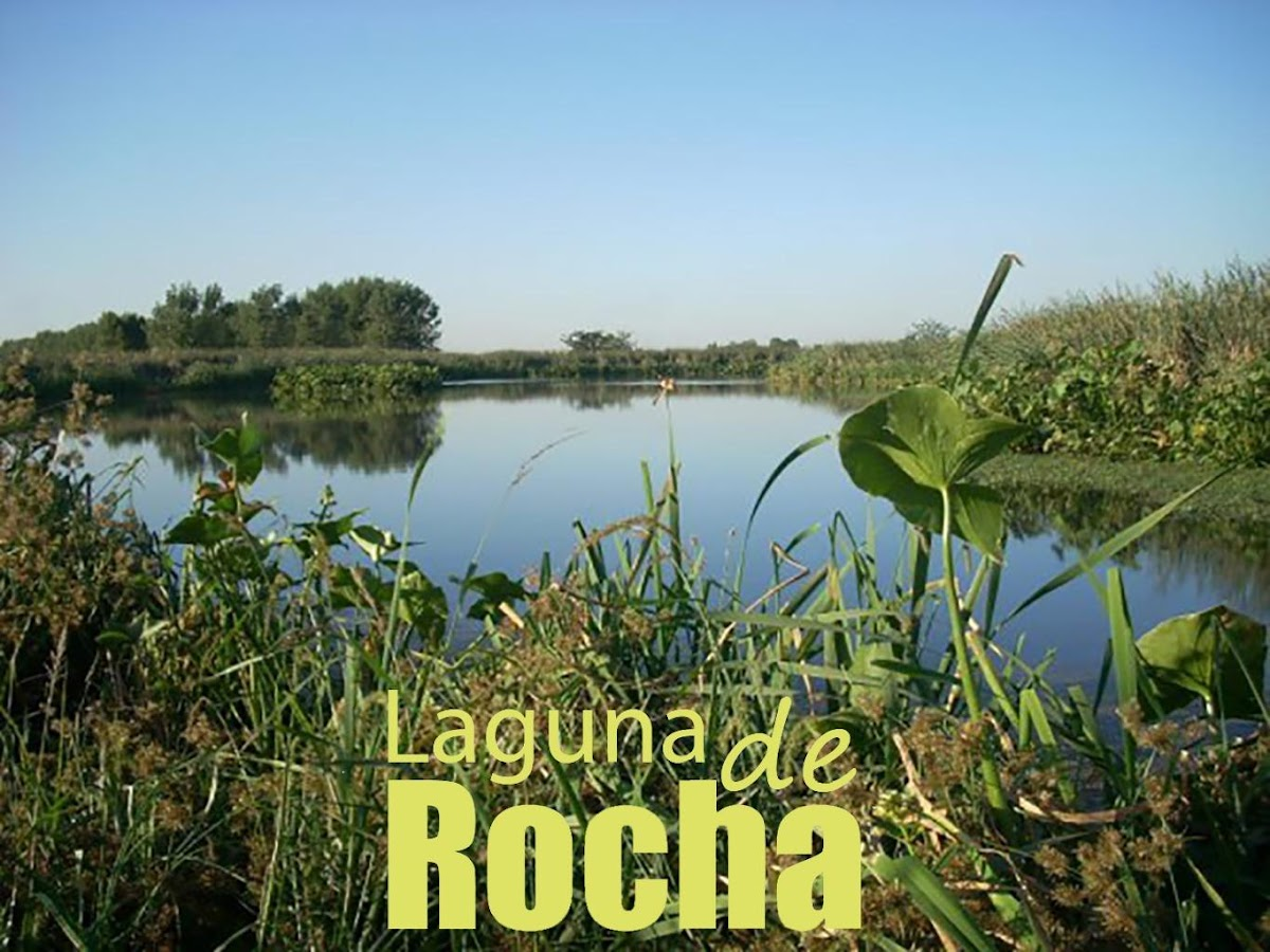 Laguna de Rocha- screenshot