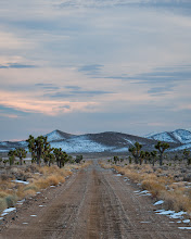 Photo: Winter in the Joshua trees