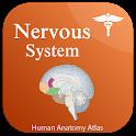 Nervous System Anatomy - Human Anatomy icon