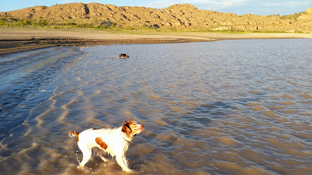 Torrey and Boulder enjoying the water