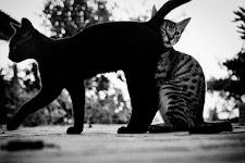 de ene kat schurkt zich tegen achterkant van een andere