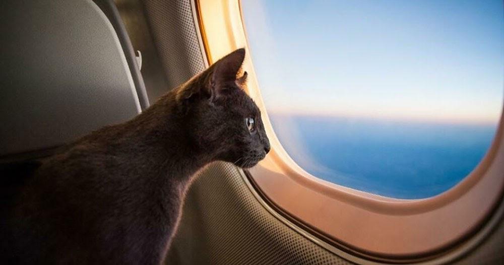 Авиаперевозка котов