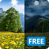 Dandelions Flowers True 3D Live Wallpaper FREE LWP