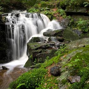 Small Waterfall by Jürgen Mayer - Landscapes Forests ( water, stream, brook, green, waterfall, natur, bach, forest, grün, nature, wald, wasserfall, creek, wasser )