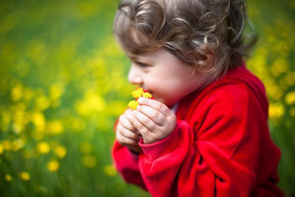 Flowers di gianluca_cardoni