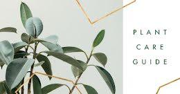 Plant Care Guide - Facebook Event Cover item